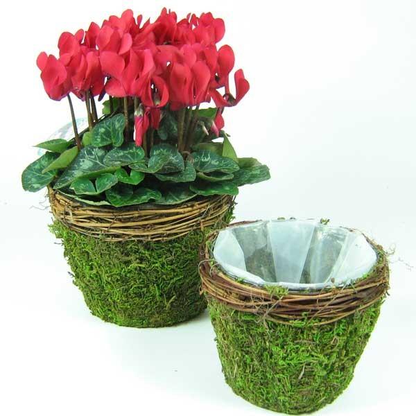 moos bertopf topf mit rebenrand d 15cm mit folie floristik basteln gef e naturmaterial. Black Bedroom Furniture Sets. Home Design Ideas