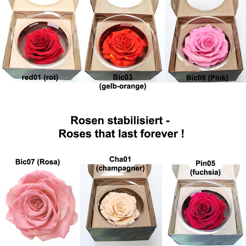 1 xxl rose gefriergetrocknet stabilisiert echte rose lange. Black Bedroom Furniture Sets. Home Design Ideas